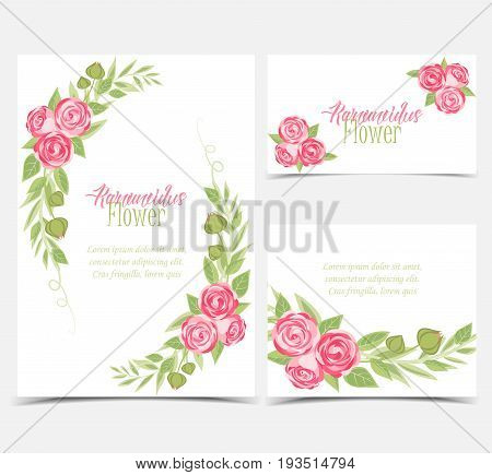 Vector illustration of ranunculus flower. Background with pink flowers. Set of greeting cards