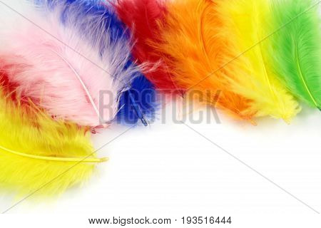Colorful feathers on a white background .
