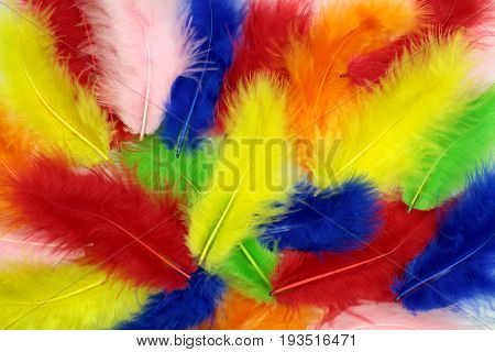 Colorful feathers background close up image .