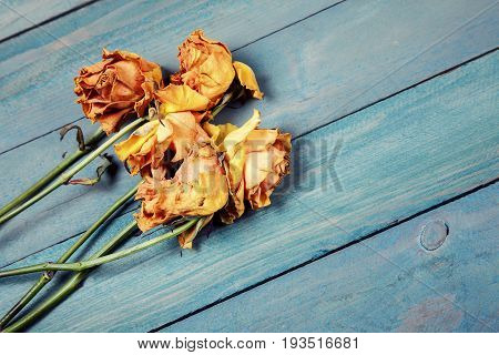 Five dried yellow roses on old blue wooden background