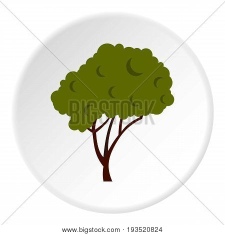 Tree with fluffy crown icon in flat circle isolated vector illustration for web