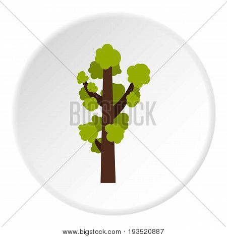 Tall tree icon in flat circle isolated vector illustration for web