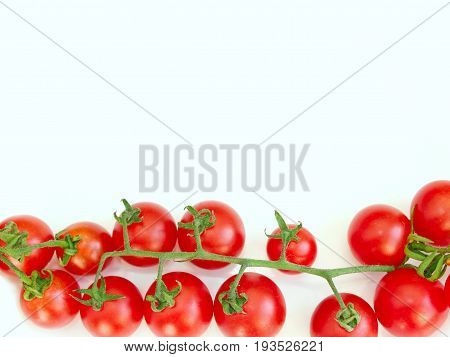 branch of fresh red tomatoes Solanum lycopersicum isolated on the white on the down of picture