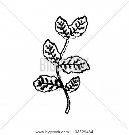 figure nice plant ingredient to condiment of food vector illustration