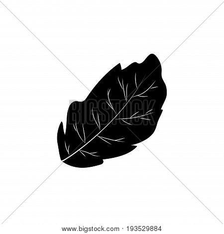 contour peppermint leaf plant and natural condiment vector illustration