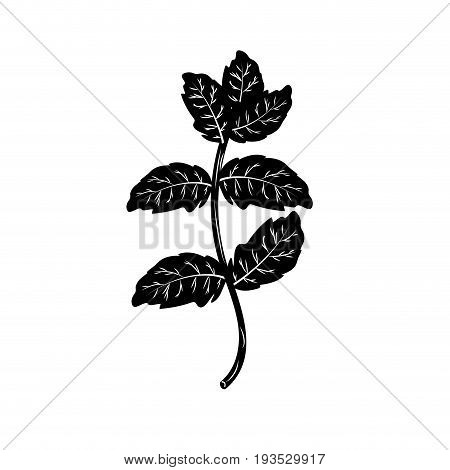 contour peppermint plant ingredient to condiment of food vector illustration