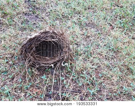 small bird's nest made from twigs in the grass