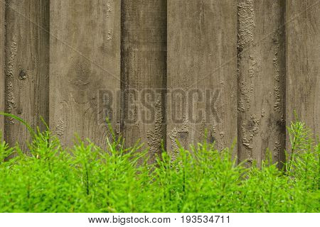 Wooden Background With Blured Plants In The Foreground, Selective Focus