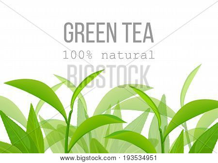 Green tea leaves and twig label card. Side view. Close up. 100 percent natural. For cosmetics, menu, poster, wrapping, spa, health care aromatherapy, advertising, tag, business card,