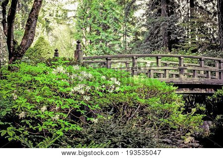 Wooden bridge in a Japanese garden spanning across a small stream.