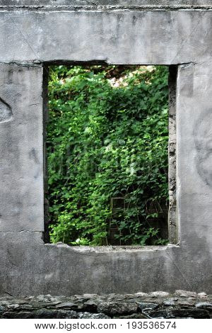 Concrete ruins with an open window to bright green lush foliage