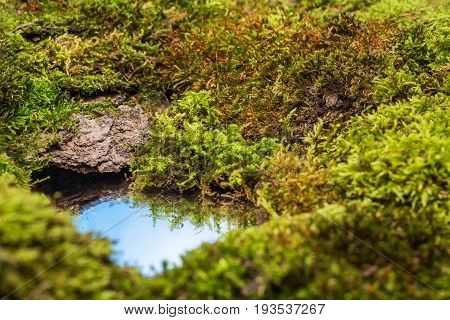 Mosses and a small puddle of water reflecting the blue sky