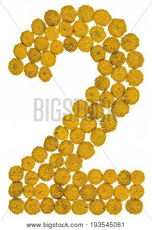 Arabic Numeral 2, Two, From Yellow Flowers Of Tansy, Isolated On White Background