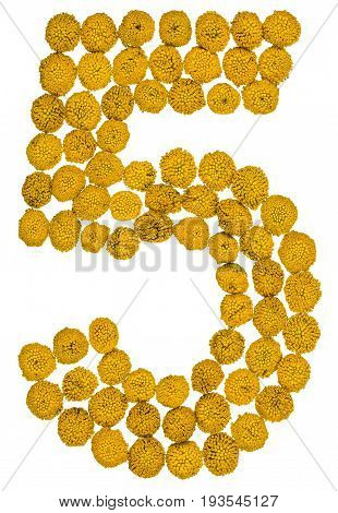 Arabic Numeral 5, Five, From Yellow Flowers Of Tansy, Isolated On White Background