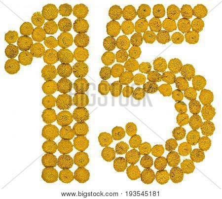 Arabic Numeral 15, Fifteen, From Yellow Flowers Of Tansy, Isolated On White Background