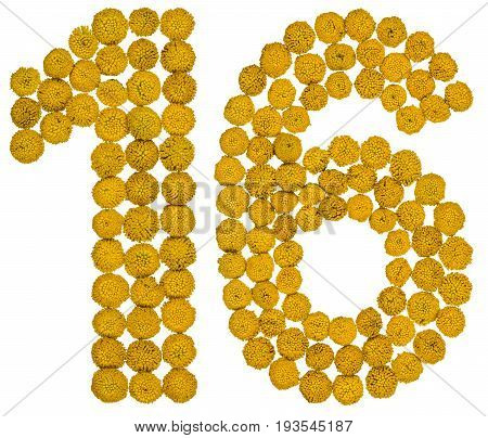 Arabic Numeral 16, Sixteen, From Yellow Flowers Of Tansy, Isolated On White Background