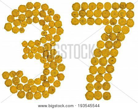 Arabic Numeral 37, Thirty Seven, From Yellow Flowers Of Tansy, Isolated On White Background