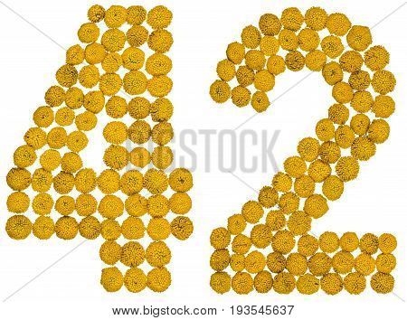 Arabic Numeral 42, Forty Two, From Yellow Flowers Of Tansy, Isolated On White Background