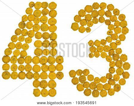 Arabic Numeral 43, Forty Three, From Yellow Flowers Of Tansy, Isolated On White Background
