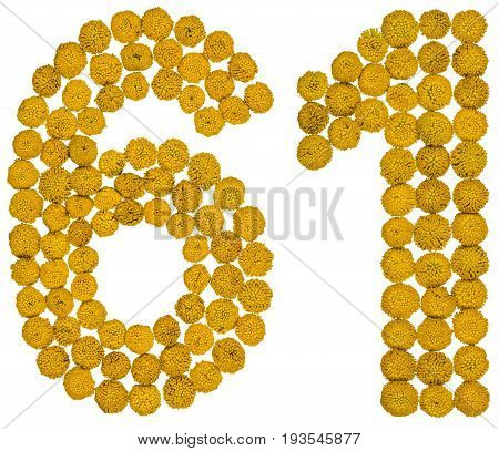 Arabic Numeral 61, Sixty One, From Yellow Flowers Of Tansy, Isolated On White Background