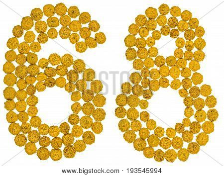 Arabic Numeral 68, Sixty Eight, From Yellow Flowers Of Tansy, Isolated On White Background