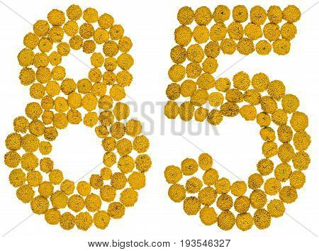 Arabic Numeral 85, Eighty Five, From Yellow Flowers Of Tansy, Isolated On White Background