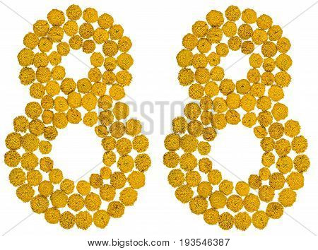 Arabic Numeral 88, Eighty Eight, From Yellow Flowers Of Tansy, Isolated On White Background