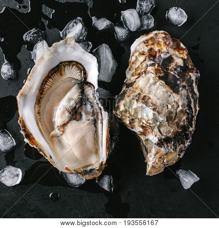 Open oyster with ice on a black background