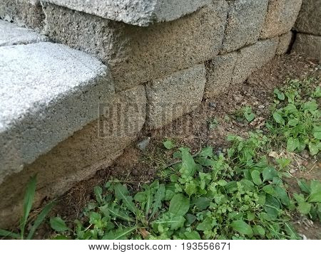 grey cement cinder blocks with small frog in the dirt