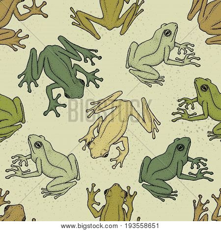 Seamless pattern with asian tree frogs. Hand-drawn ink vector illustration