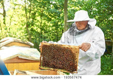 Shot of a senior beekeeper wearing beekeeping costume working with bees harvesting honey from beehive copyspace.