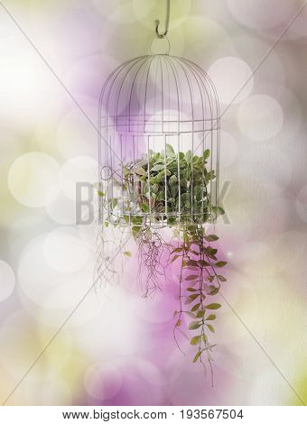 Green plant in birdcage with bokeh background.