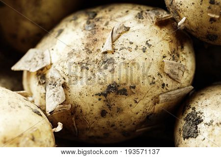 Young unwashed potato scattered on a wooden brown background place for text close-up