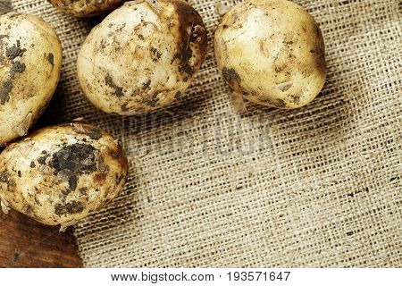 One potato unwashed on burlap top view space for text