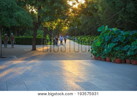 Beijing, China - August 06, 2014: People walking in Jingshan Park in the evening before sunset in summer, soft light, soft focus