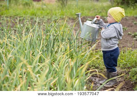 Cute little toddler boy watering plants with watering can in the garden. Adorable little child helping parents to grow vegetables. Activities with children outdoors.