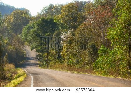 Local Road and trees in Tak Province, Thailand