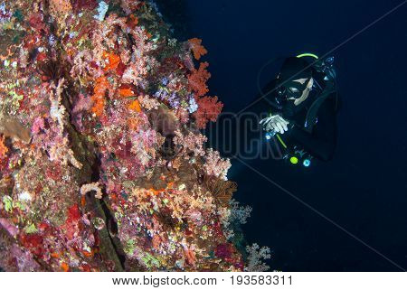 Young Man Scuba Diving On A Beautiful Soft Coral Reef In South Andaman, Thailand