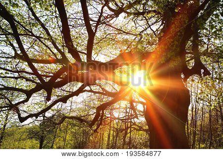 Sun Shinning Through Tree Branches