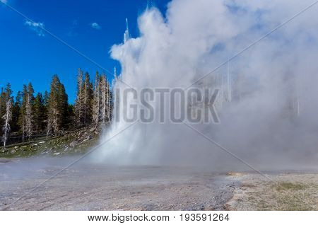 Grand Geyser  In Yellowstone National Park, Usa