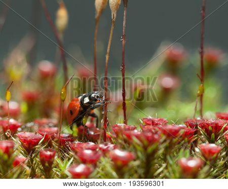 Ladybird Going To Climb
