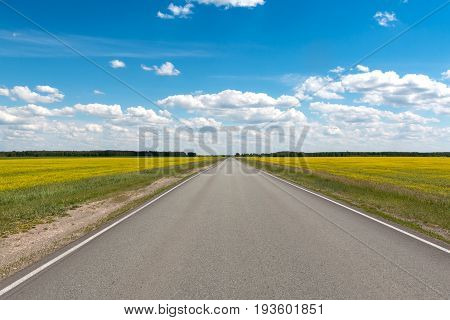 The road goes into the distance between flowering fields under the blue sky