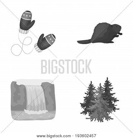 Canadian fir, beaver and other symbols of Canada.Canada set collection icons in monochrome style vector symbol stock illustration .
