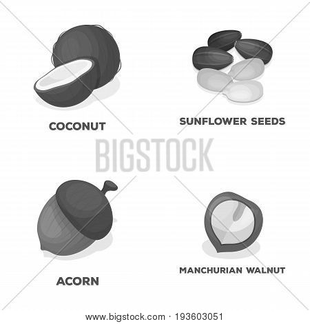 Coconut, acorn, sunflower seeds, manchueian walnut.Different kinds of nuts set collection icons in monochrome style vector symbol stock illustration .