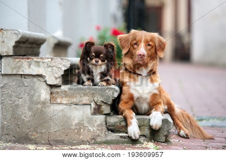 two adorable friendly dogs posing together outdoors