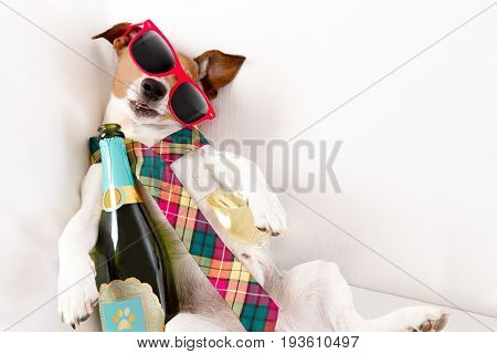 Drunk Hangover  Dog