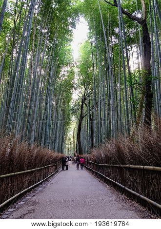 Bamboo Grove At Arashiyama In Kyoto, Japan