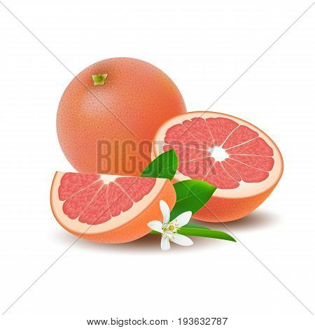 Isolated colored group of grapefruits slice half and whole juicy fruit with green leaf white flower and shadow on white background. Realistic citrus