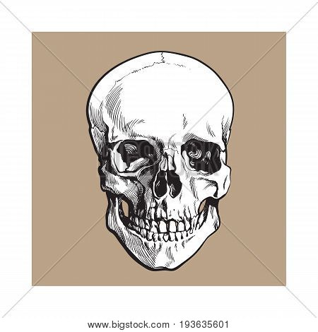 Hand drawn human skull, anatomical model, black and white sketch style vector illustration isolated on brown background. Realistic front view hand drawing of human skull