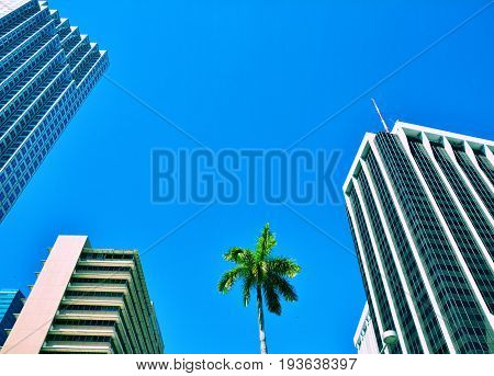 Palm tree and skyscrapers on blue sky in Miami